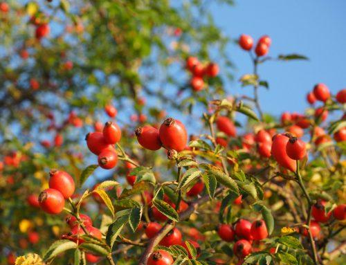 'Wild Shropshire Foraging Walk' with James Sherwin